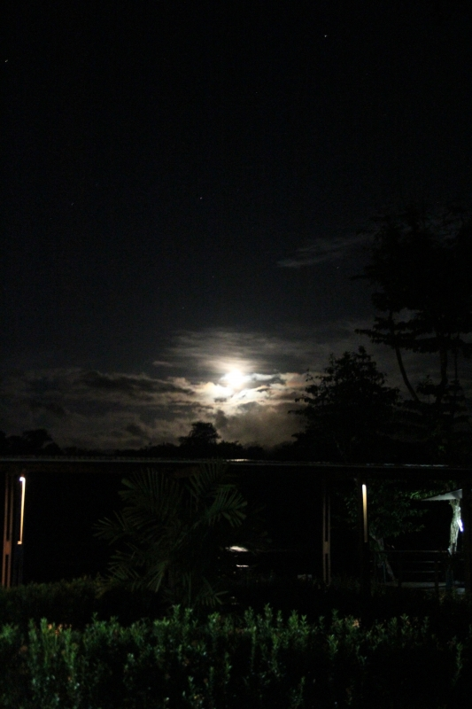 Moonlit Suriname