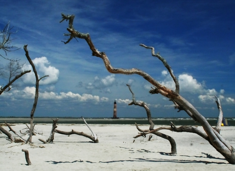 Morris Island Light And Driftwood