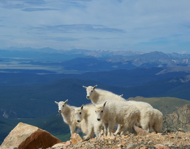 Mountain Goat Kindergarten