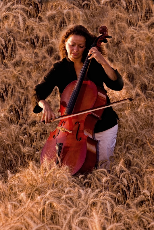 Music In The Wheat Fileds