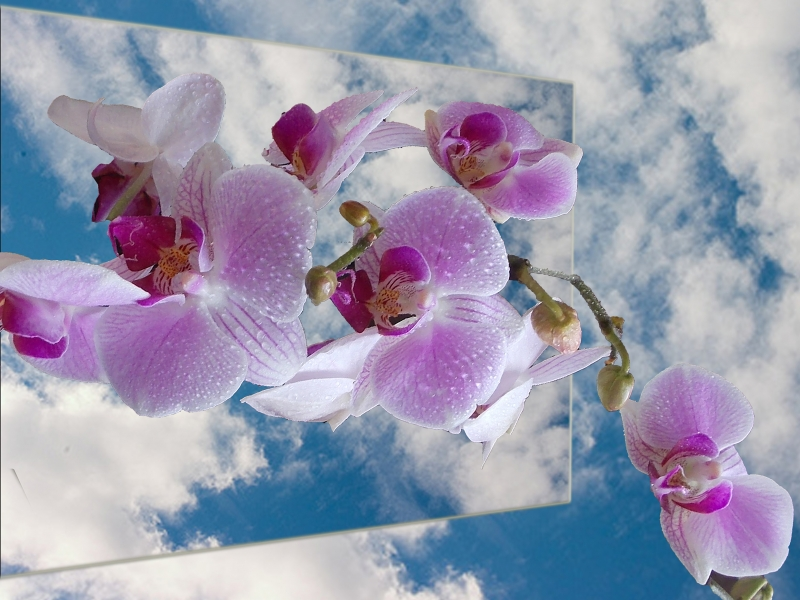 Orchid In The Clouds