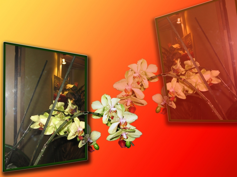 Orchid In The Mirror