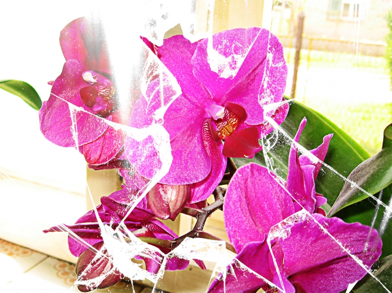 Orchid Window Behind