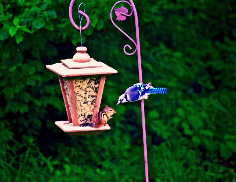 Peace At The Feeder