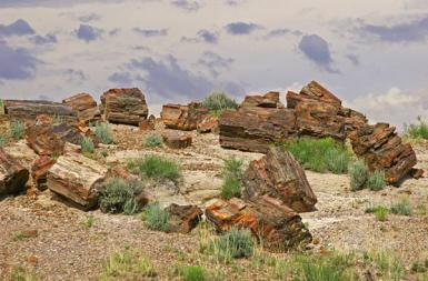 Petrified Logs On The Hill