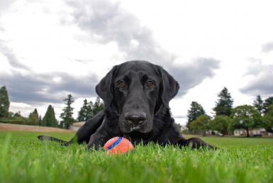 Please Throw My Ball…