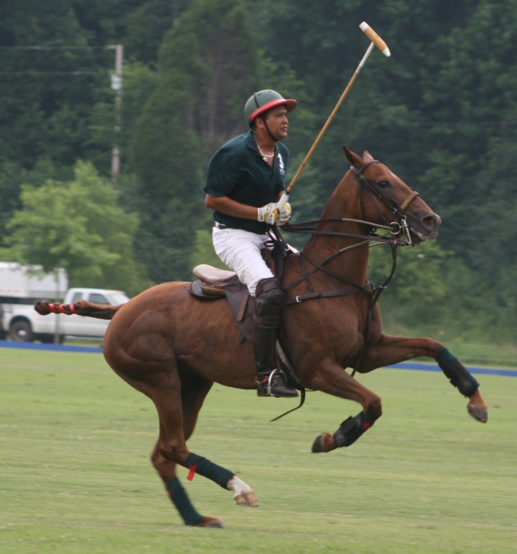 Polo At It's Best