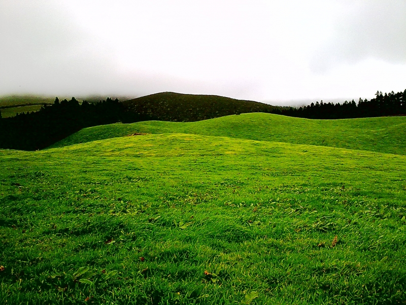 Prairie At Terceira Island, Azores