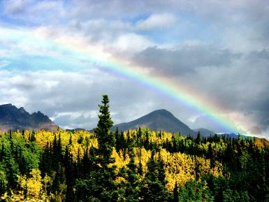 Rainbow Over Aspen In Denali