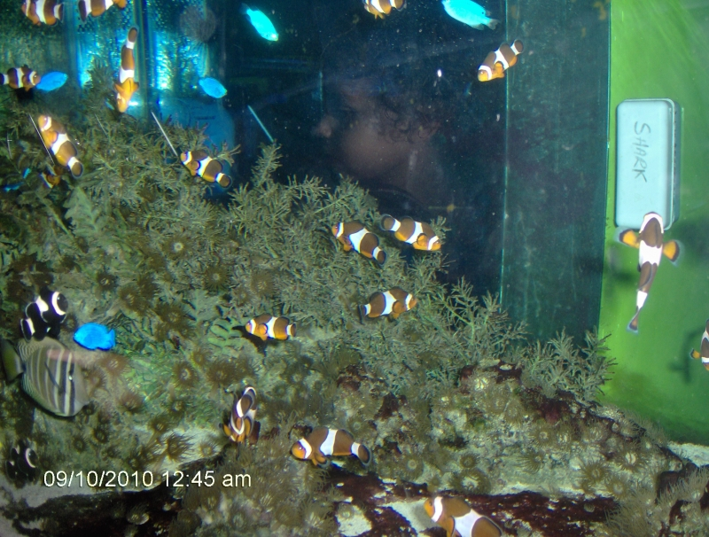 Reflected Image In A Fishtank