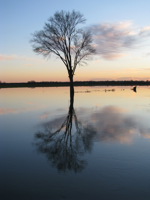 Reflection In The Flood