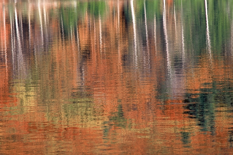 Reflections On Benedict Pond