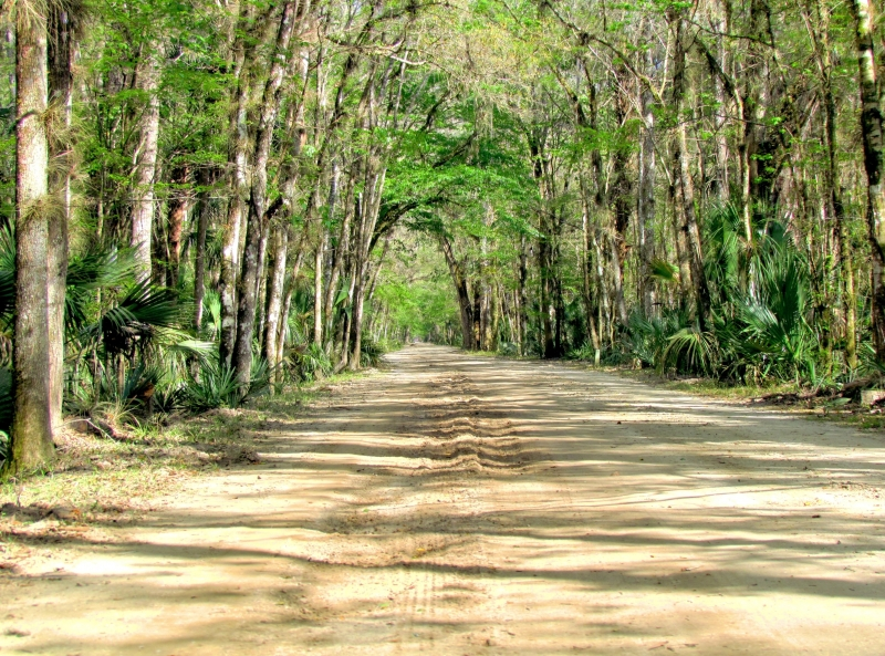 Road Through A Riverine Forest
