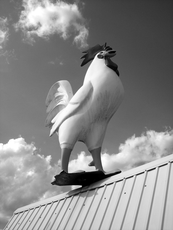 Rooster On A Roof