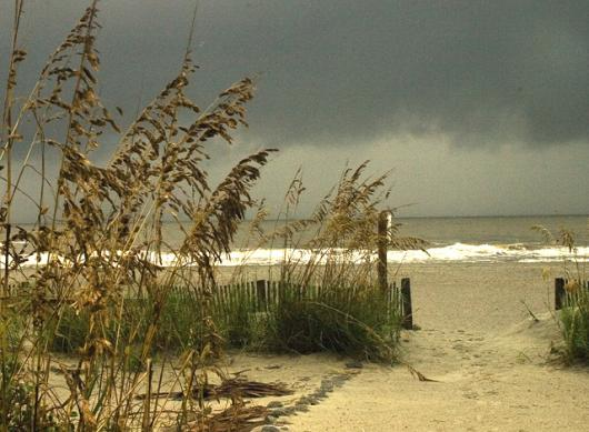 Sea Oats In The Wind