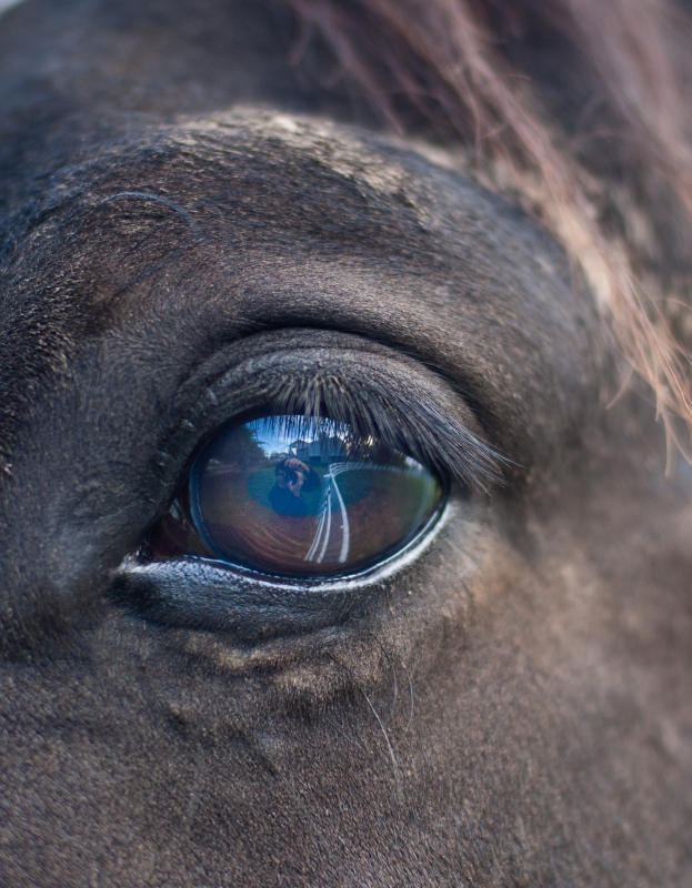 Self Portrait In The Eye Of A Horse