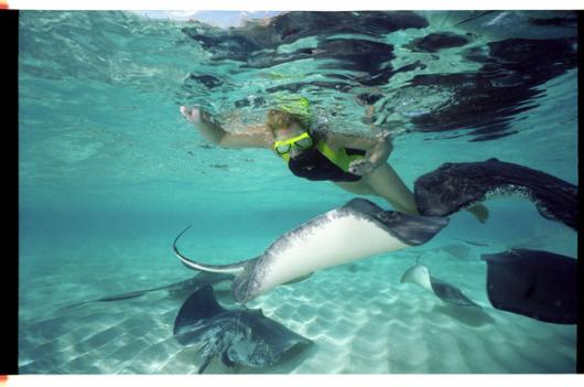 Snorkeler With Stingrays