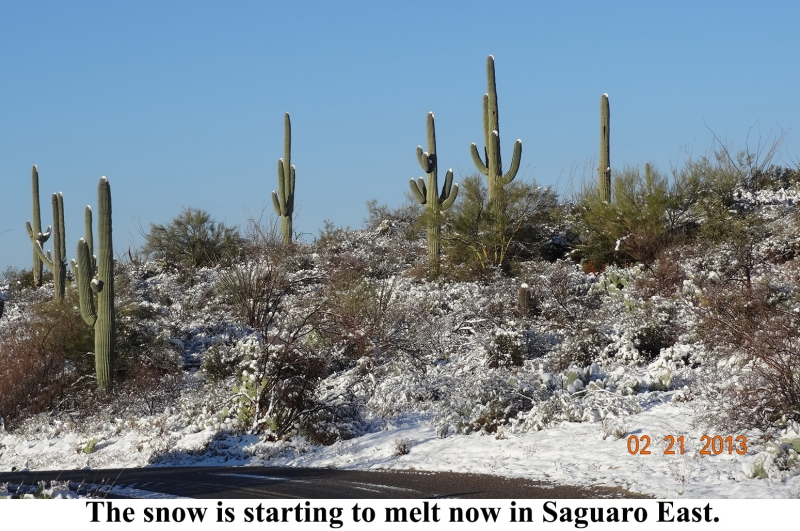Snow In Saguaro