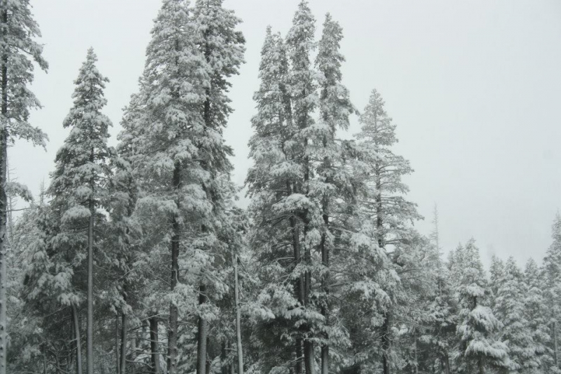 Snow In Tahoe. 2012.