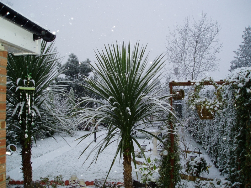 Snow On A Palm Tree