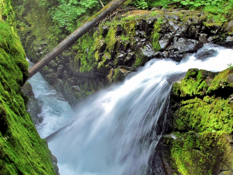 Sol Duc Falls And River Gorge