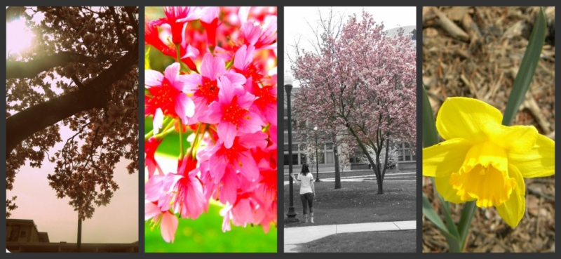 Springtime At Eastern Illinois University