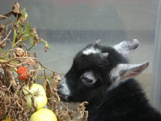 Stopping To Smell The Tomatoes