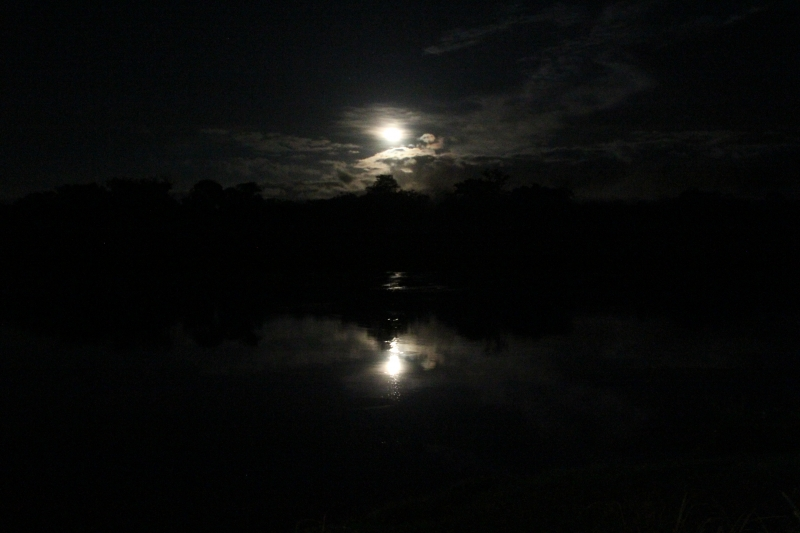 Suriname River Moonlit