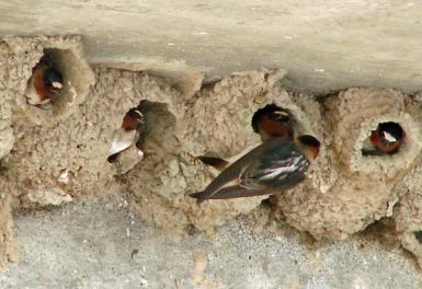 Swallow Condominiums