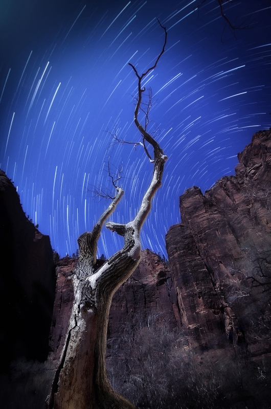Temple Tree Star Trails