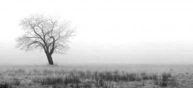 The Fog And The Tree