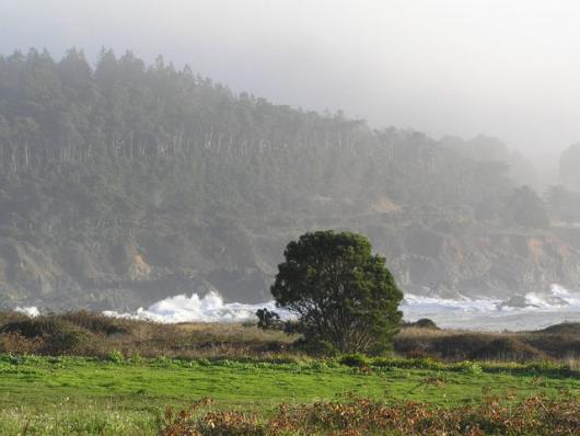 The Fog At Mendocino