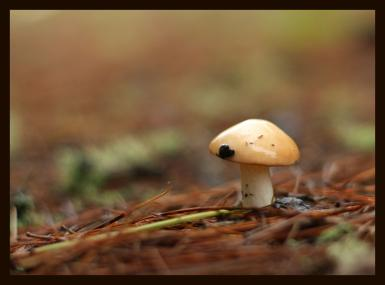 The Little Wet Mushroom