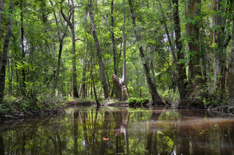 The Realm Of The Altamaha