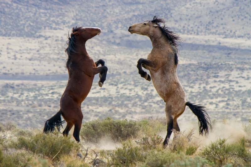 The Wild Horse Dance