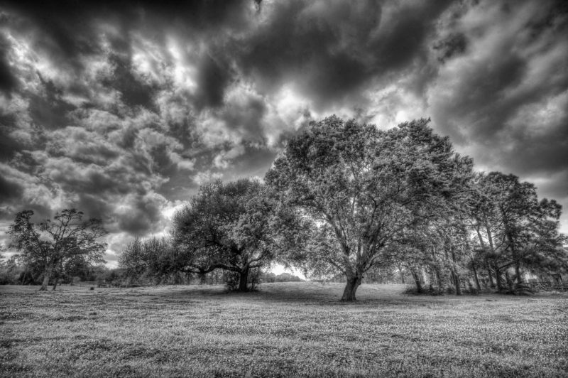 Trees Hdr