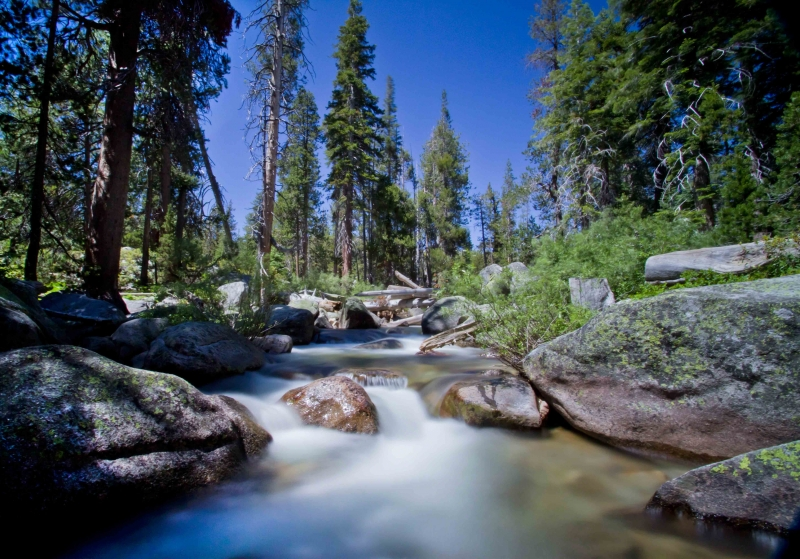 Trout Stream On Tioga Pass