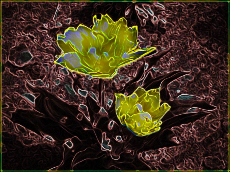 Tulip With Photoshop