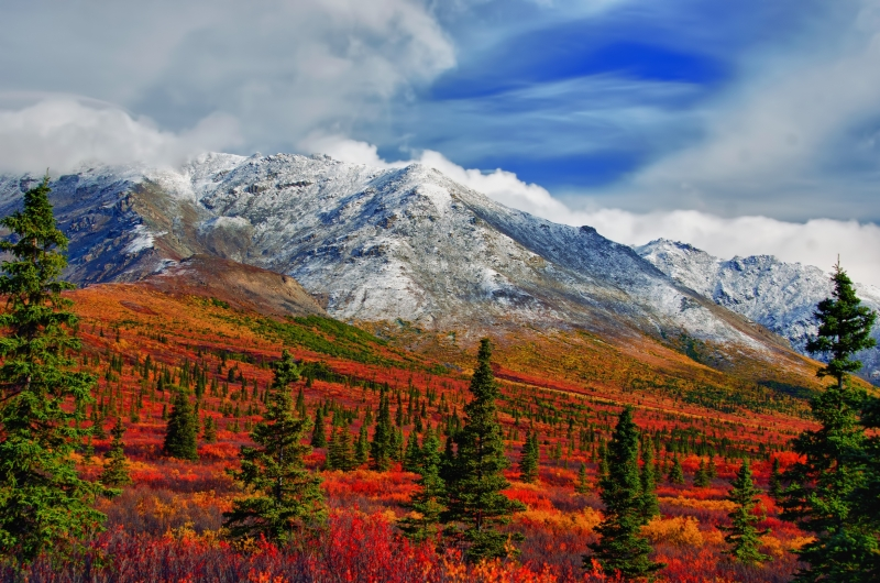 Valley View Of Mt Healy – Denali Np