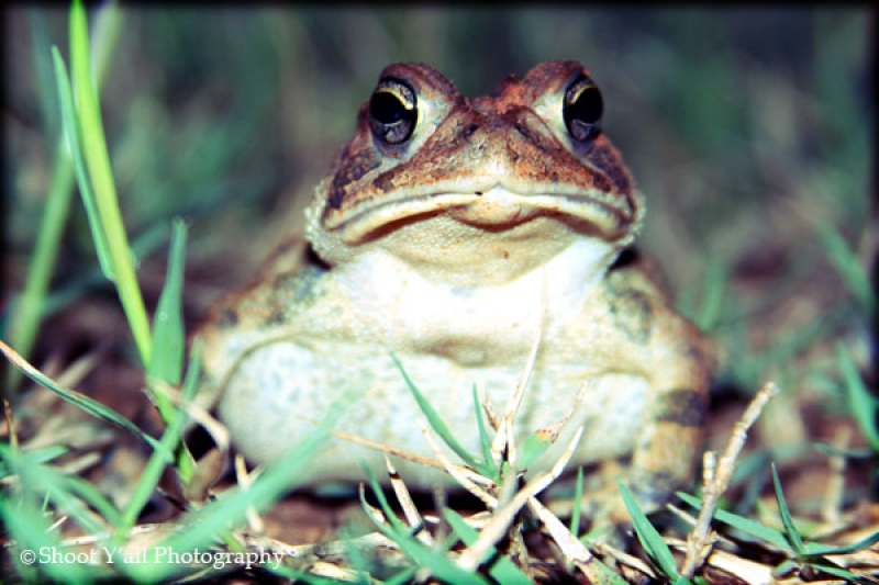 Walter The Toad