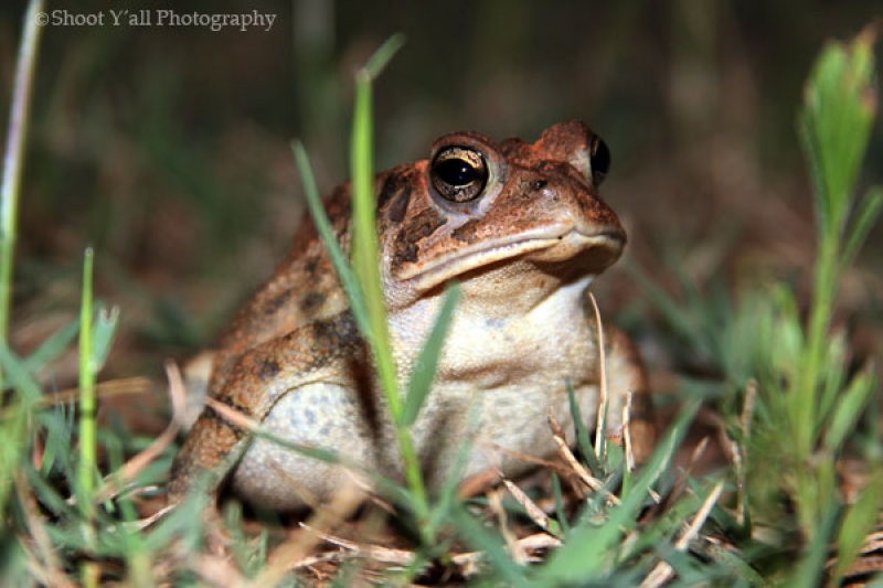 Walter The Toad, Posing