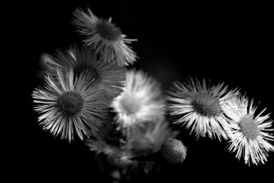 Weeds In Black And White