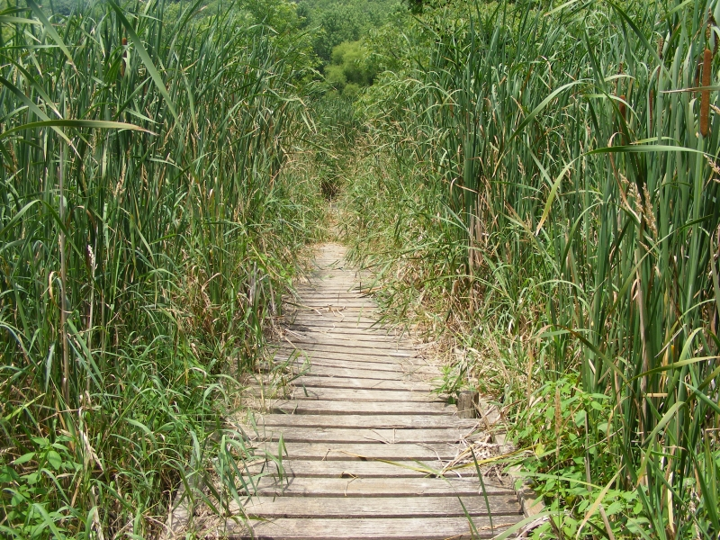 Wetlands Board Walk