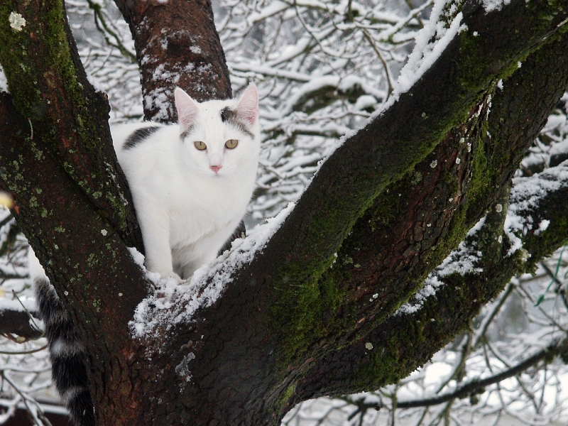 White Cat In Snow Storm