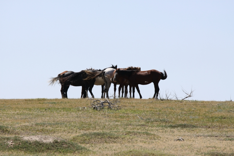 "Wild Horses ""wait'n In The Wind"""