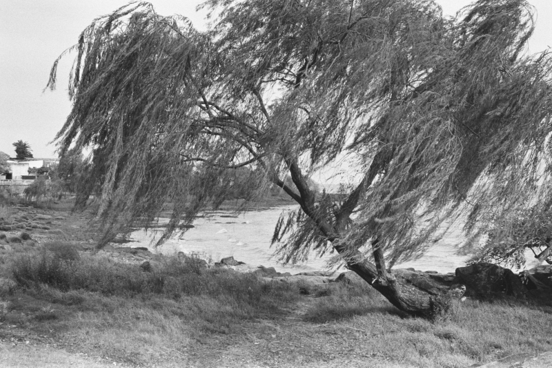 Wind In The River