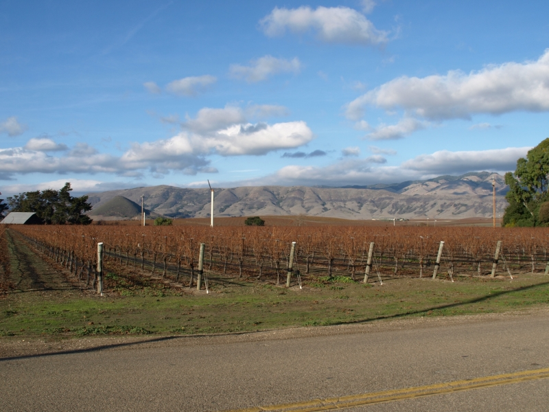 Wine Country In San Luis Obispo