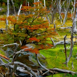 Autumn In Tierra Del Fuego