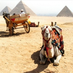On The Way To The Pyramids