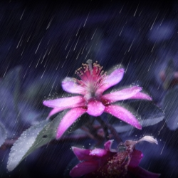 Radiance In The Rain